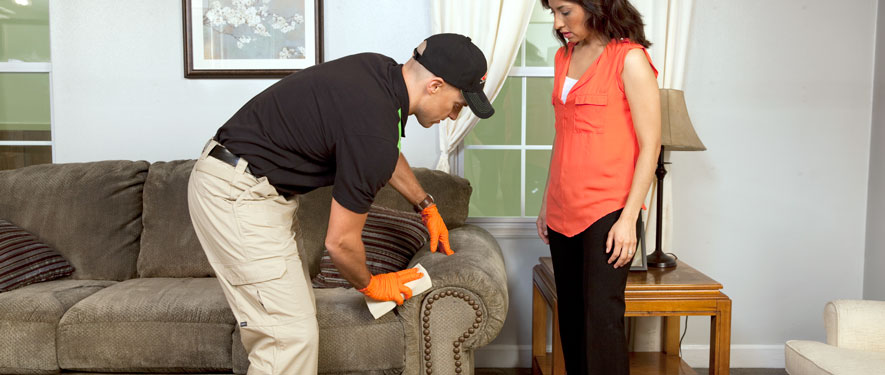 Arlington, MA carpet upholstery cleaning